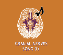 The Cranial Nerves Song (Part I)
