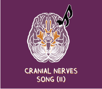 The Cranial Nerves Song Part II